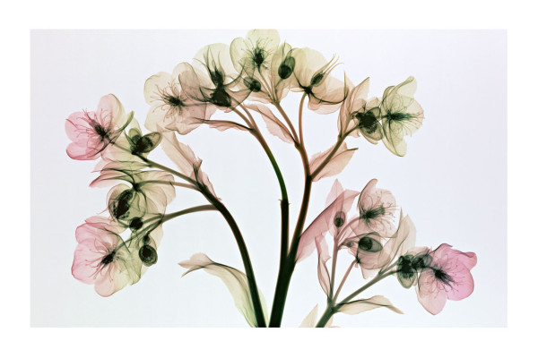 sandra almeida diseño gráfico vigo radiografias de plantas